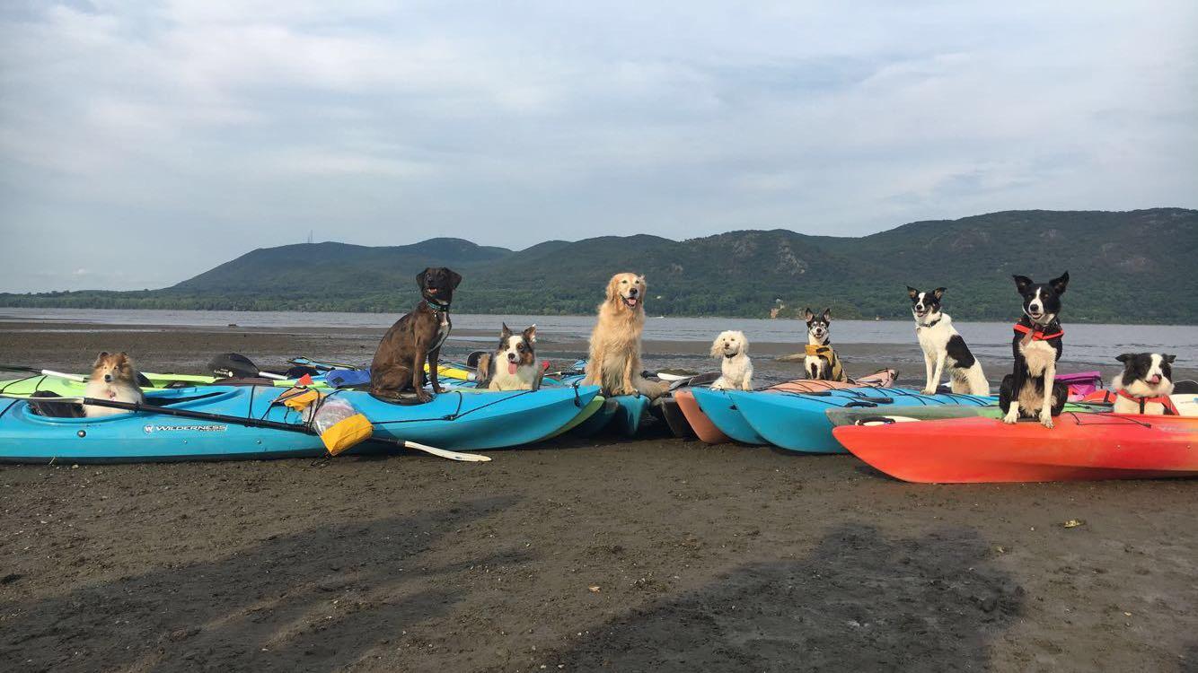 Doggie-2017